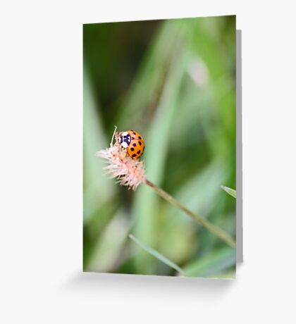 Spot the insect... Greeting Card
