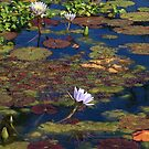 Colors at the Pond by Lyle Hatch