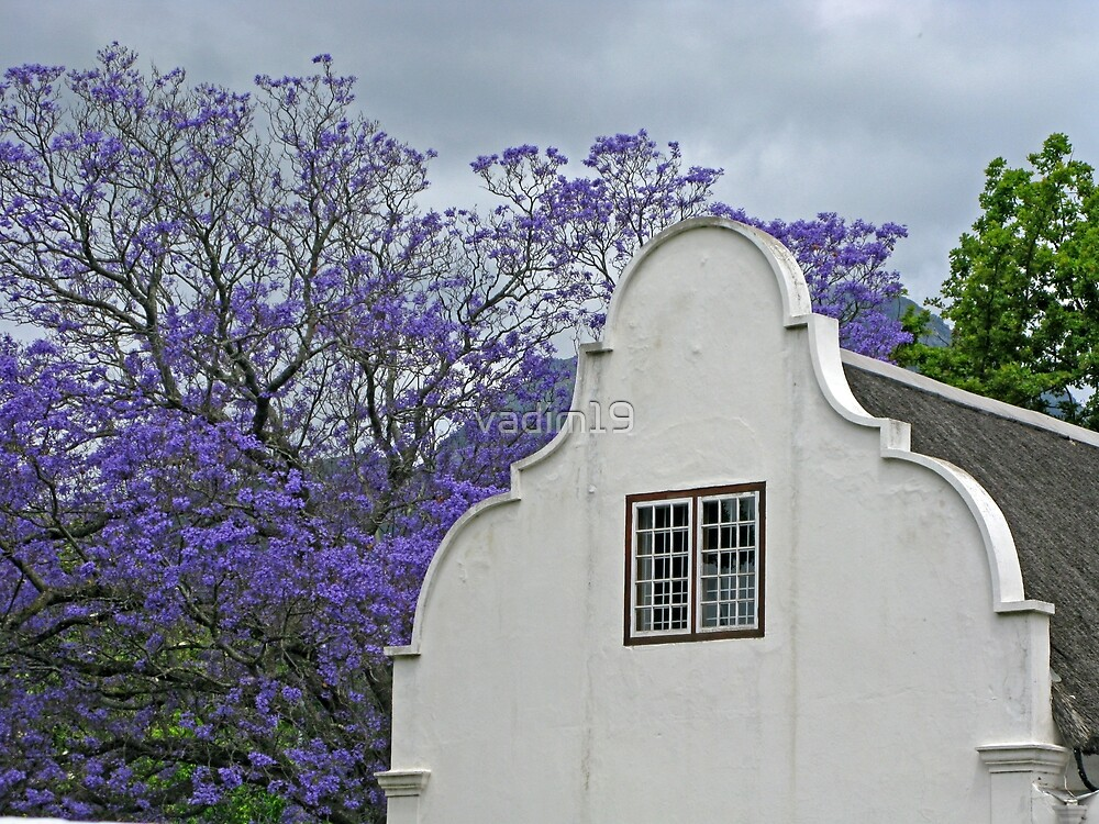 Stellenbosch, South Africa by vadim19