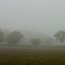 i like foggy days... fog simplifies our view by removing all the clutter... by Jenny Miller