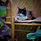 Garden Kitty by Sharon Morris