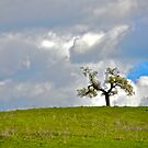 Lonely Tree by Cheryl  Lunde