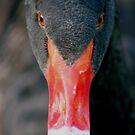 Black Swan by sarah ward