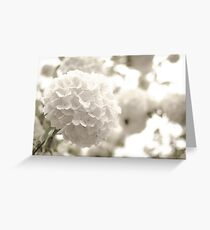 Butterfly Floral Greeting Card