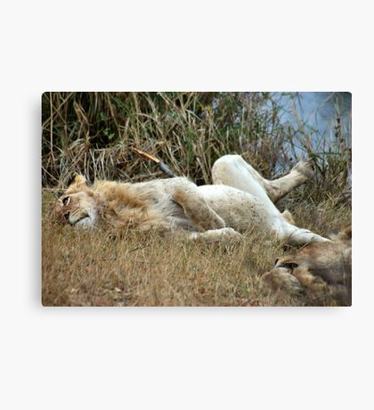 AFTER THE KILL.... WELL FED!! Canvas Print