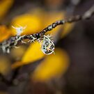 Delicate Droplet by Stephanie Johnson