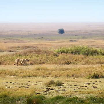 African Lion In The Landscape, Serengeti, Tanzania  by Carole-Anne