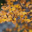 Turning of the Fagus  by michellerena