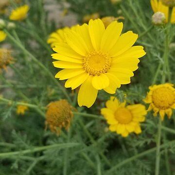 Yellow Fresh Flowers by jordynrhaburn