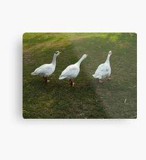 ~~~***quack, quack, quack***~~~ Metal Print