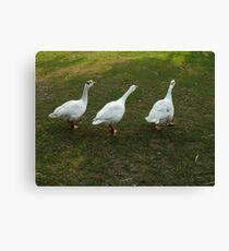 ~~~***quack, quack, quack***~~~ Canvas Print