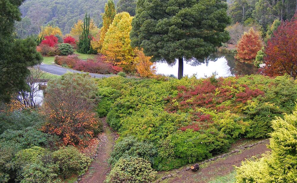 autumn beauty at Burnie (Tasmania) by gaylene