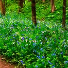 Bluebells in the Forest by Kathy Weaver