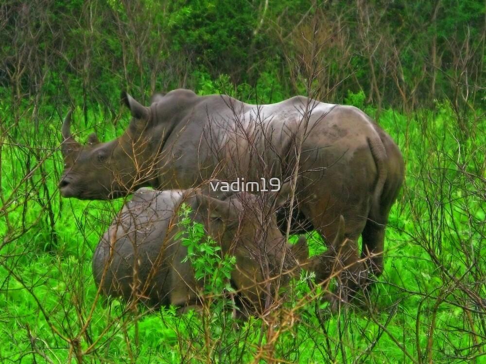 Rhinos, Hluhluwe National Park, South Africa by vadim19