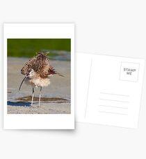 Fluffy Postcards