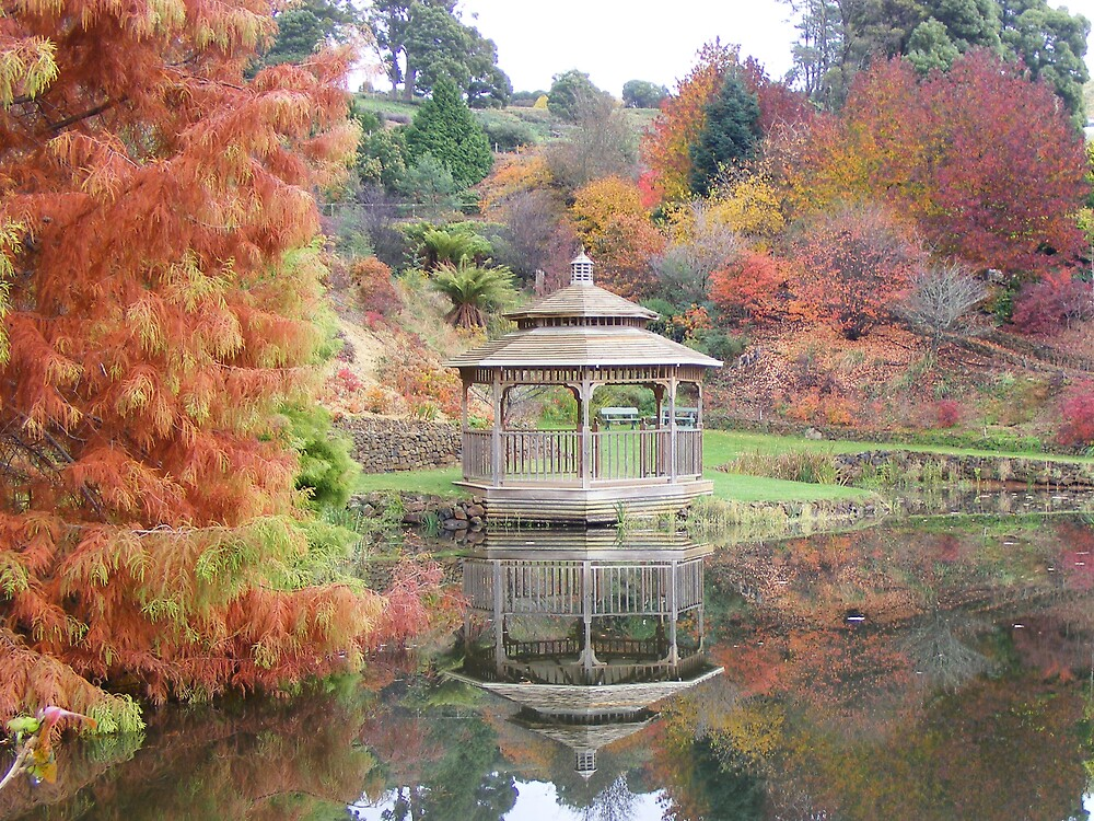reflective images at Burnie's Rhododendron Garden (Tasmania) by gaylene