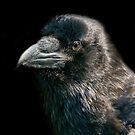 Raven. by Darren Wilkes