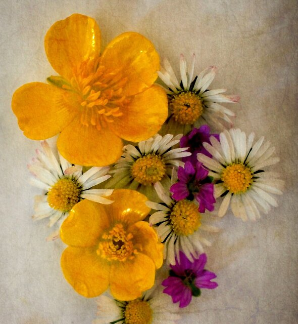 Vintage Wild Spring Flowers by Christine Lake