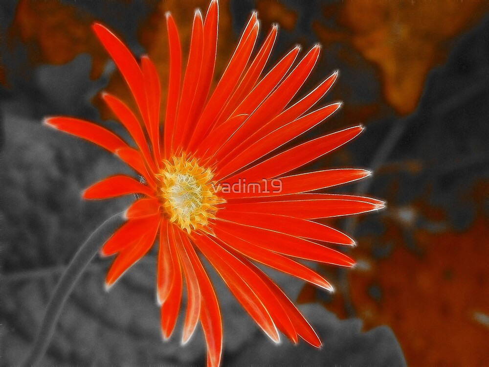 South African Daisy II by vadim19