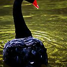 Swan River by oddoutlet