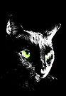 Black Cat 4 - Card by Etakeh