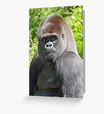 "An intimate portrait close-up 3 (c) (h) ""Back Silver"" A gorilla who is the star of the day .... Greeting Card"