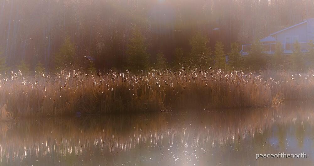 Morning Softness by peaceofthenorth