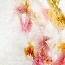 Tulip Glow - Textured by Ann Garrett