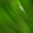 Soft Green by Rebekah  McLeod