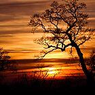 Sunset by CJTill
