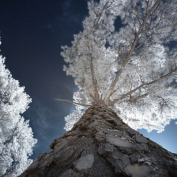 Tall Infrared Tree by TrickiWoo