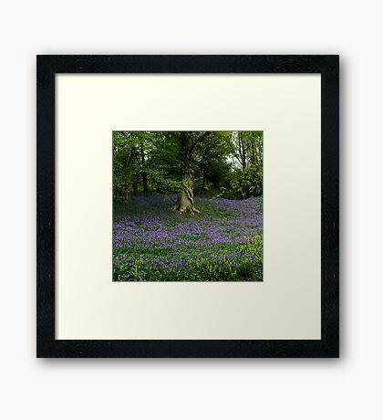 Forest Bluebells Framed Print