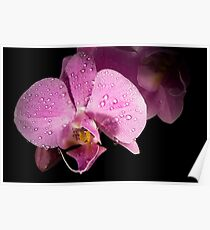 Beautifull orchid Poster
