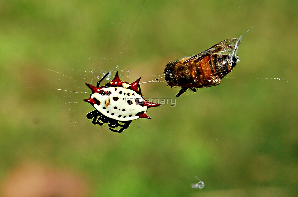 Jewelled Spider and dinner guest by triciamary