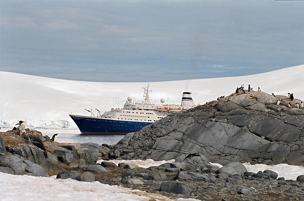 Huh, another ship load of tourists!! by Rosie Appleton