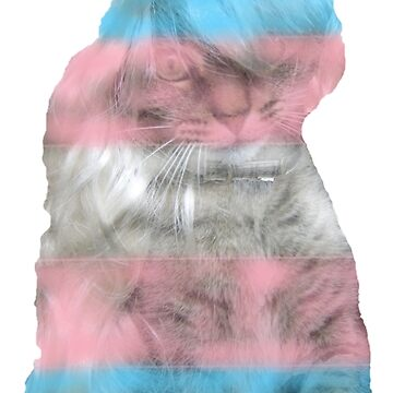 Trans Pride Kitty by CoolioGoldshoe