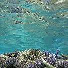 Coral Reeflections II by Reef Ecoimages