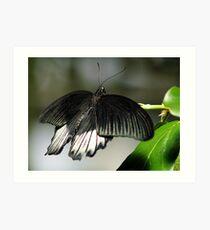 Schmetterling Art Print