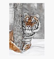 Tree Huggin Photographic Print