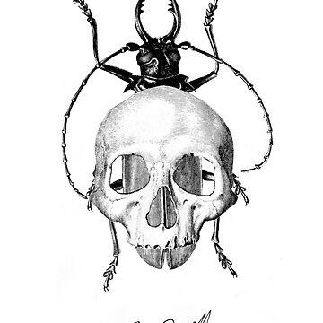 Beetle Skull by rfarrelldesign