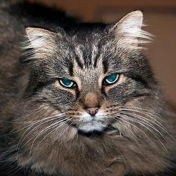 Tiggy, The Cinema Museum cat [b.2001 d.2016]   by JohnGaffen