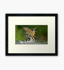 Diving Kingfisher Framed Print