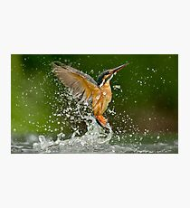 Diving Kingfisher Photographic Print
