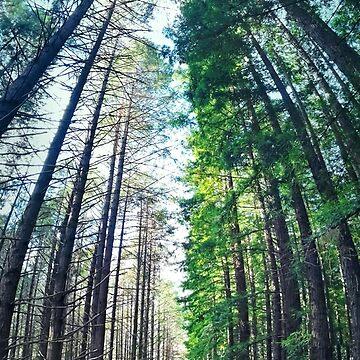 Treeburst by JayCougar