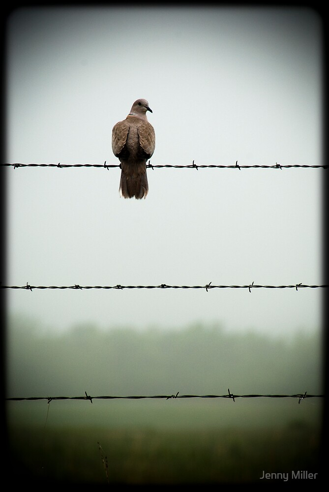 Quot Do You Mind I Am Trying To Sit On This Barbed Wire Fence