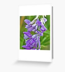 Goat's Rue Greeting Card