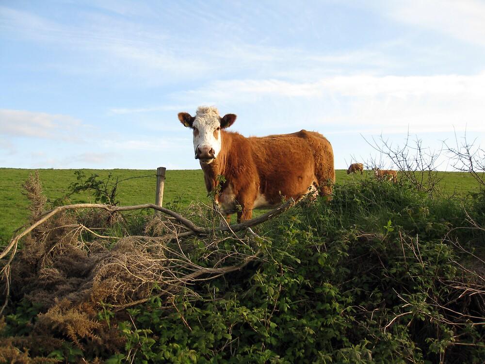Rural Irish farm scene by John Quinn