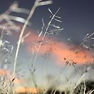 snowflakegrass by The Mattmosphere
