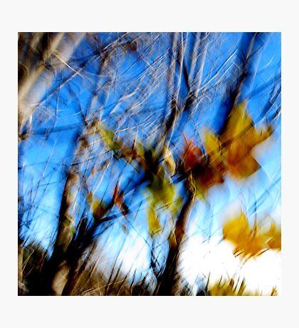 Remnants of Autumn Photographic Print
