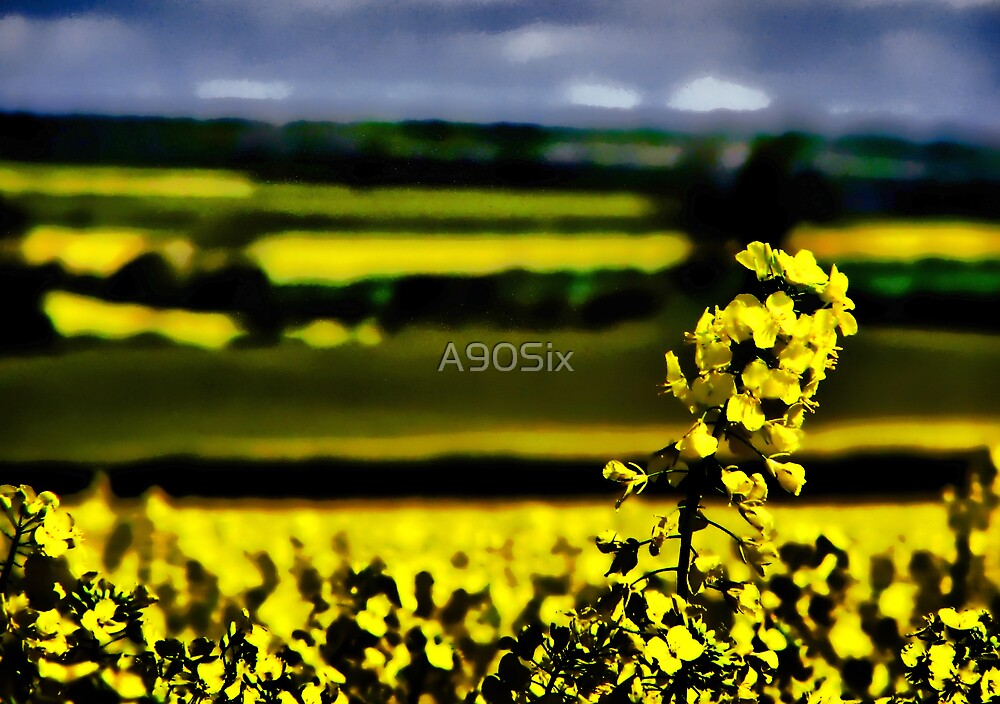 Fields of Rape by A90Six